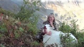 Alaska's Hottest Huntress MT. Goat hunting