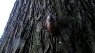 7月下旬 セミの幼虫を探しに行きました。 詳しくはブログ「その他大勢 n...