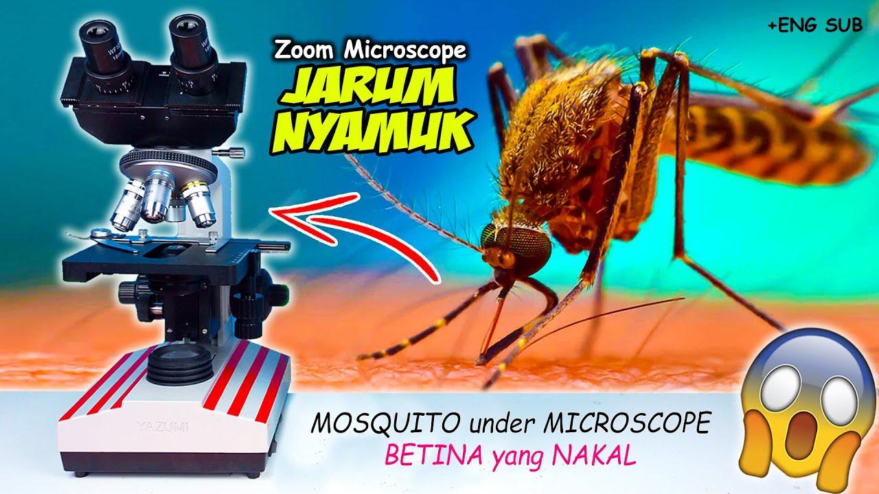 JARUM NYAMUK HOROR DI MIKROSKOP | Mosquito Needle Microscope Zoom 1000X