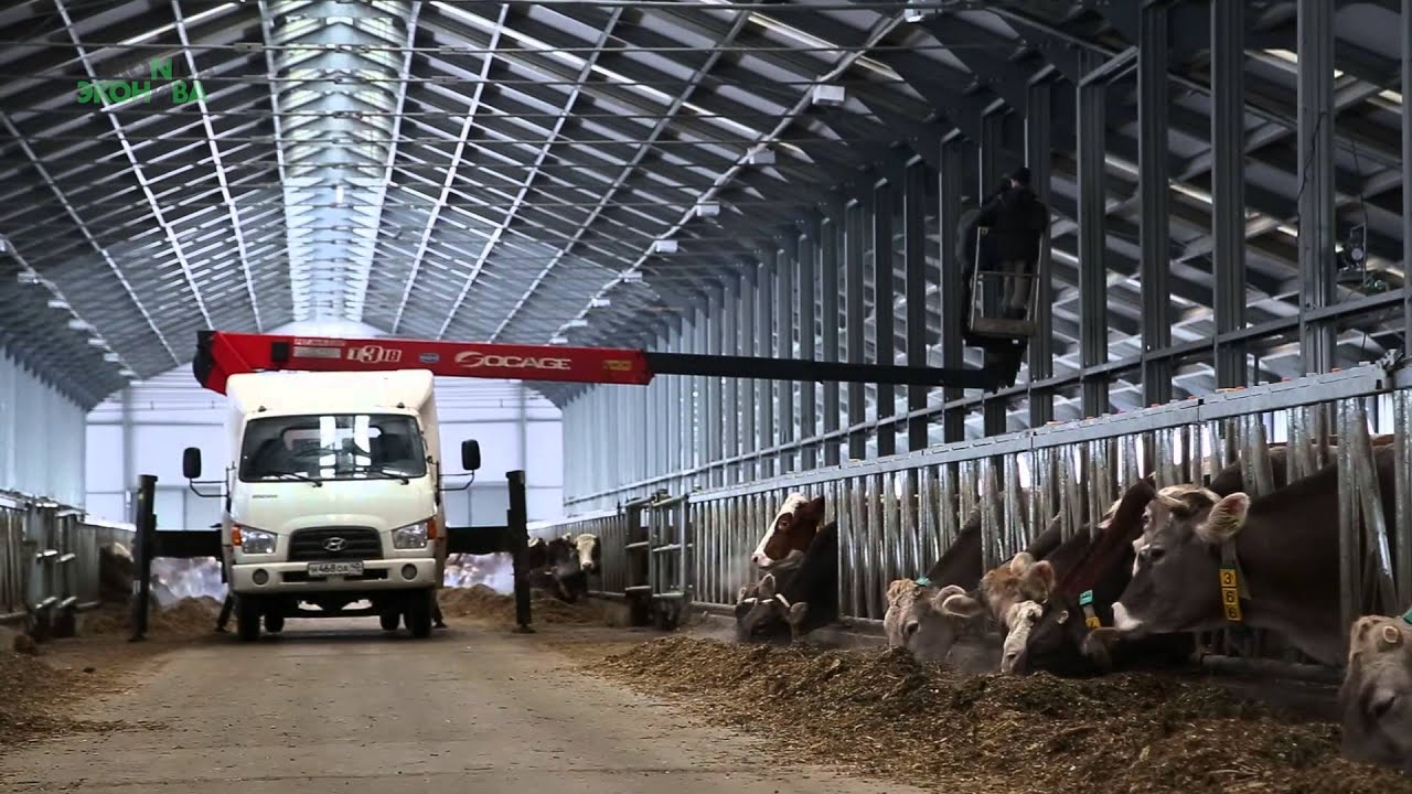 Первые нашли поставщика в калужской области, вторые – в сергиевом посаде. Каждый нашел свою птицу, исходя из экономики заведения. « понятно, что стритфуд и фастфуд, где наценка не так велика, не может себе позволить хорошую дорогую птицу, потому что для них во главе угла цена курицы в.