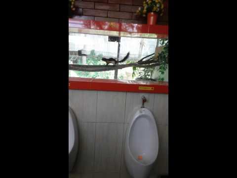 Toilet spbu harjosari 4450601
