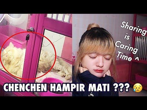 CHENCHEN HAMPIR MATI KARNA VIRUS OR DIARE ? :( SHARING IS CARING CAT VIDEOS - CHENCHEN SURVIVE