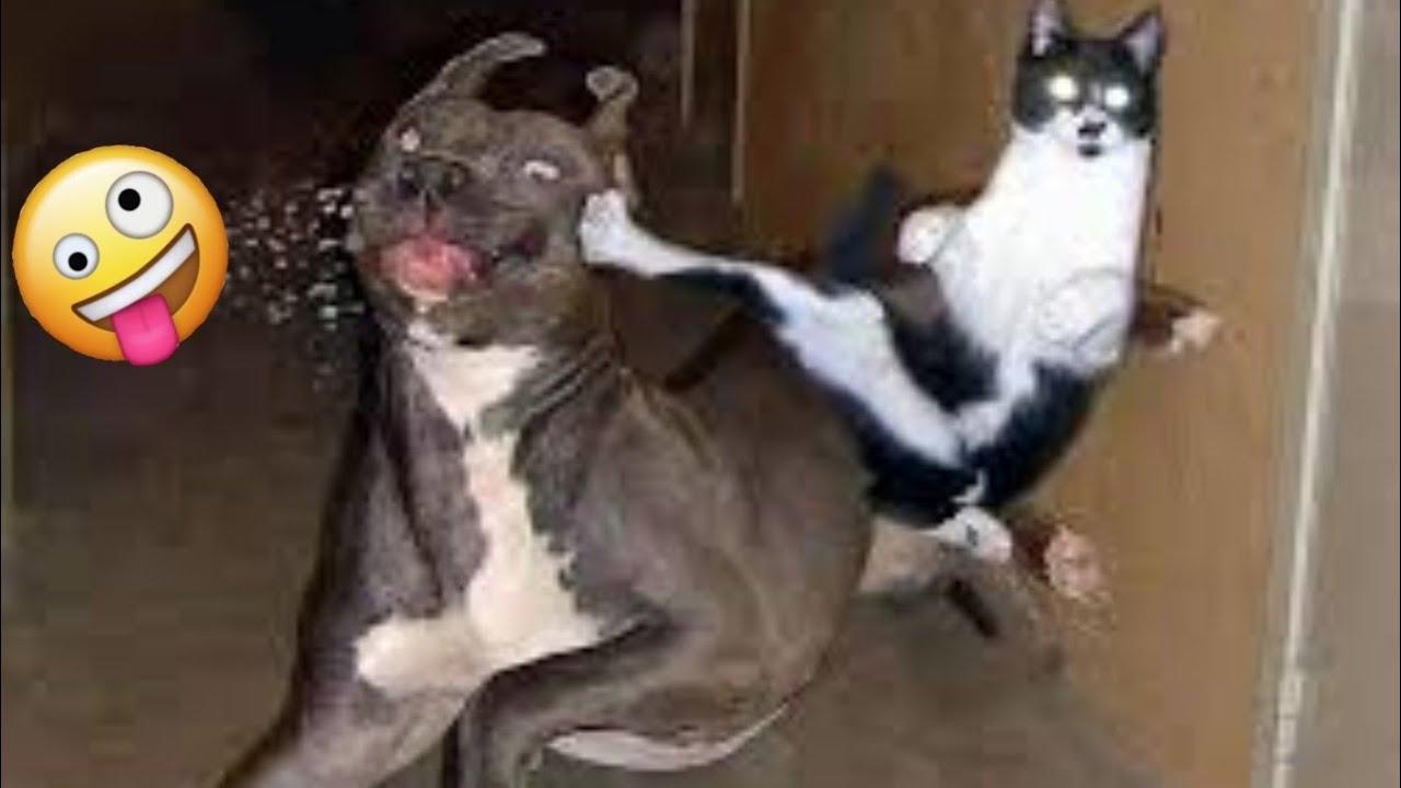 🤣  Compilación de Videos Chistosos de Mascotas 🐱🐶 Perros y Gatos Graciosos