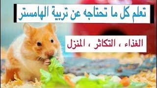 الهامستر 🐹 وكل ما يتعلق بالتربيتة بشكل عام / All you need to know about hamster | Mohamed Vlog