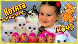 Киндер Сюрприз Видео КОТЯТА УЧИМСЯ СЧИТАТЬ Яйца Шоколадные Девочке Открываем Коллекцию Игрушек Кошки