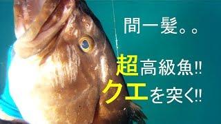 過去の動画 今後、魚突き動画をメインにアップ予定です。。