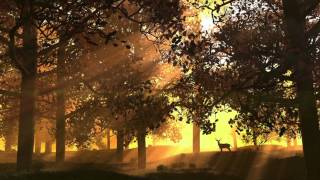 Calm Music: Dream Music,  New Age Meditation Music, Relaxation Instrumental, Spa Music