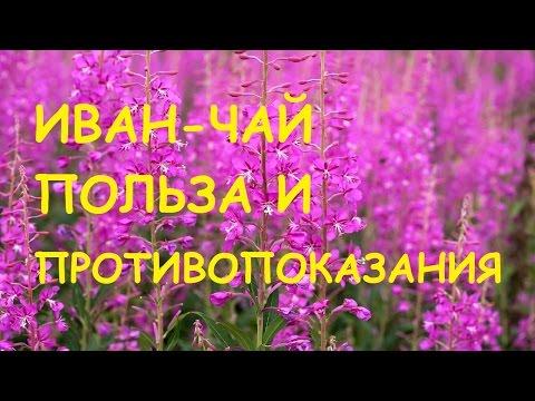 Иван чай. Полезные свойства и противопоказания.