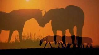 ENYA - Braveheart Theme (Horses & Sunset)