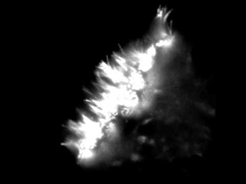 Olfactory Cilia