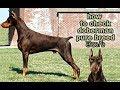 How to check Doberman pure Breed in Telugu | Taju logics