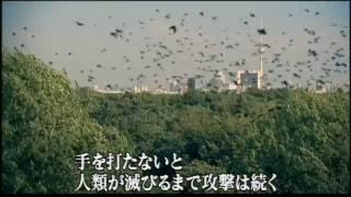 『鳥』 予告編