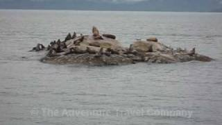 2008 (07) Alaska (Steller Sea Lion) TATC
