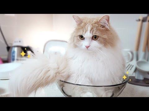 고양이를 위한 따뜻한 팥빙수