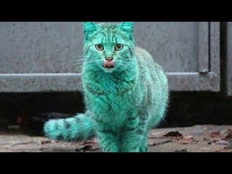 Улетные приколы с кошками (10 видео)