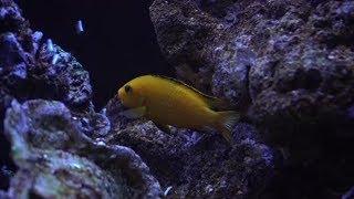 Aquarium Fish Night 3 | Stock Footage - Videohive