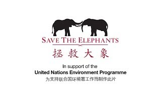 Li Bingbing, actress and UNEP Goodwill Ambassador on Elephants and Ivory Poaching