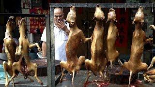 Китай: фестиваль собачьего мяса раздел общество