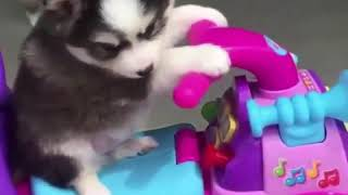 Funny Animals Video Cute Pets Video Dogs Cats Video Kittens Meowing Video
