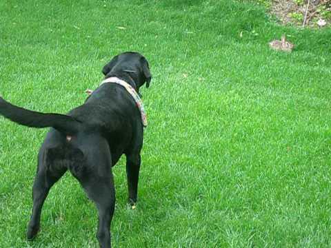 Gemeinsame Unsichtbarer Hundezaun PIF-300 von PetSafe günstig bestellen &IJ_82