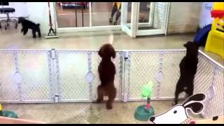 Excited Puppy Spots It's Owner Puppy Dog Dancing To Webbie [you Bad Mix]