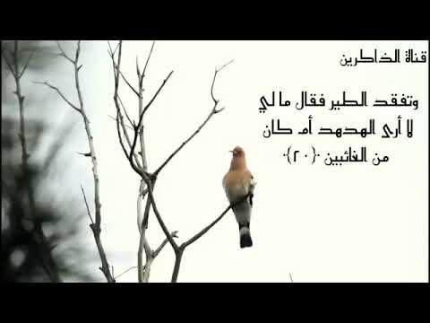 القارئ إسلام صبحي وتفقد الطير فقال ما لي لا أرى الهدهد أم كان من الغائبين النمل 20