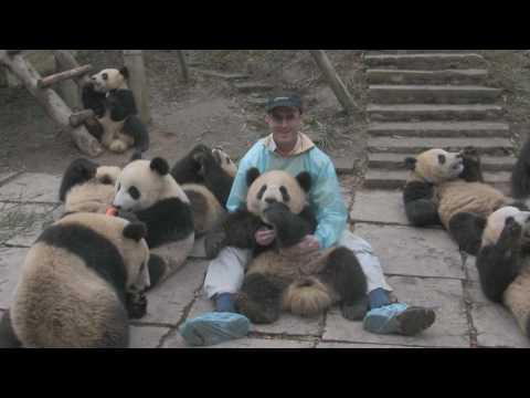Bifengxia Panda Park - Playing with Pandas