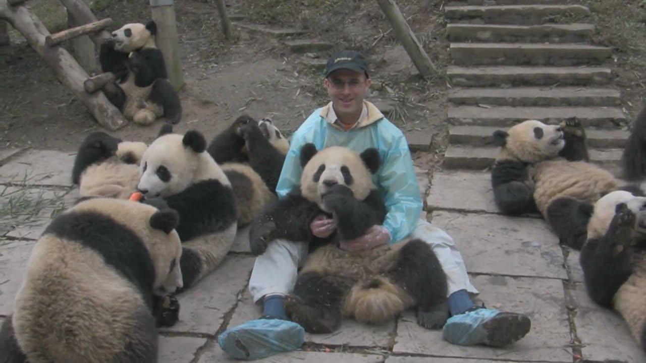Bifengxia Panda Park Playing With Pandas Youtube