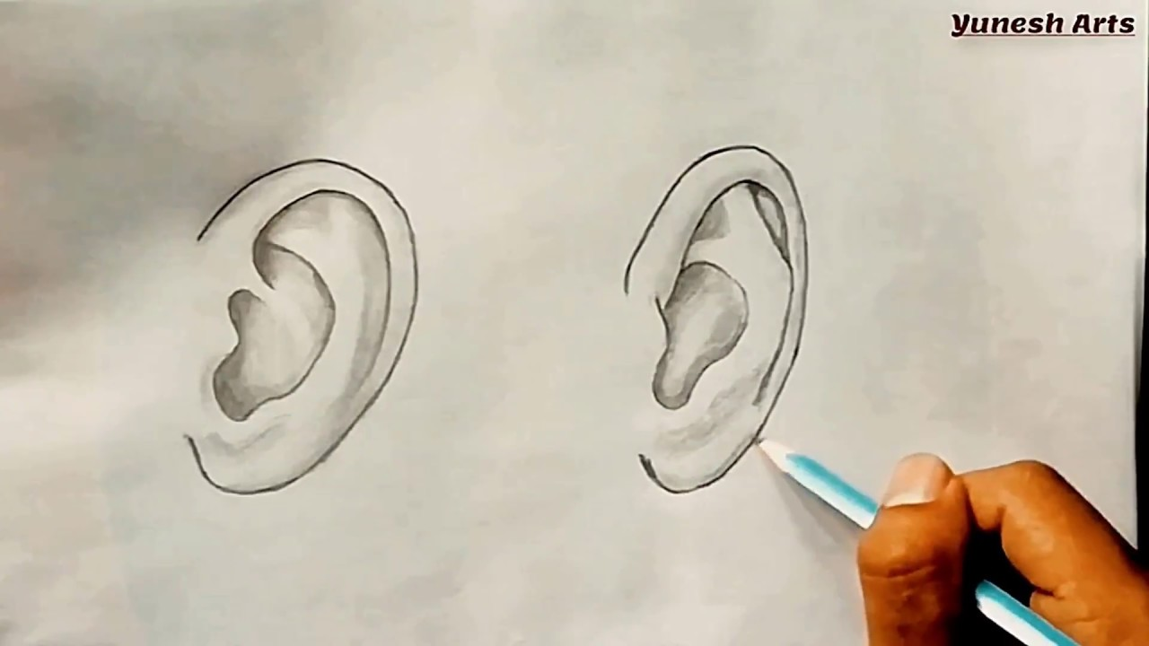 How To Draw Ears Side View And Front View Youtube