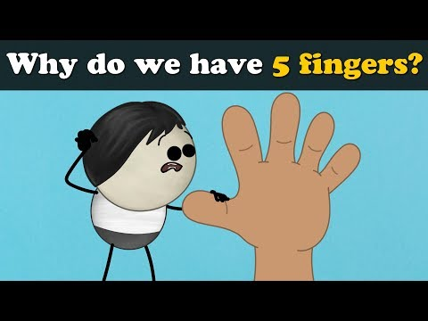 Why do we have 5 fingers? | #aumsum #kids #science #education #children