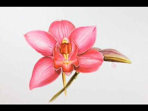 Watercolor Pink Orchid Painting Demonstration