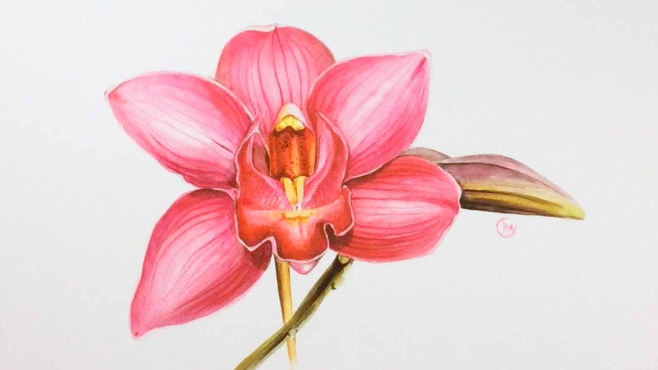 Watercolor Pink Orchid Painting Demonstration Youtube