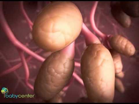 Видео 27 неделя беременности узи