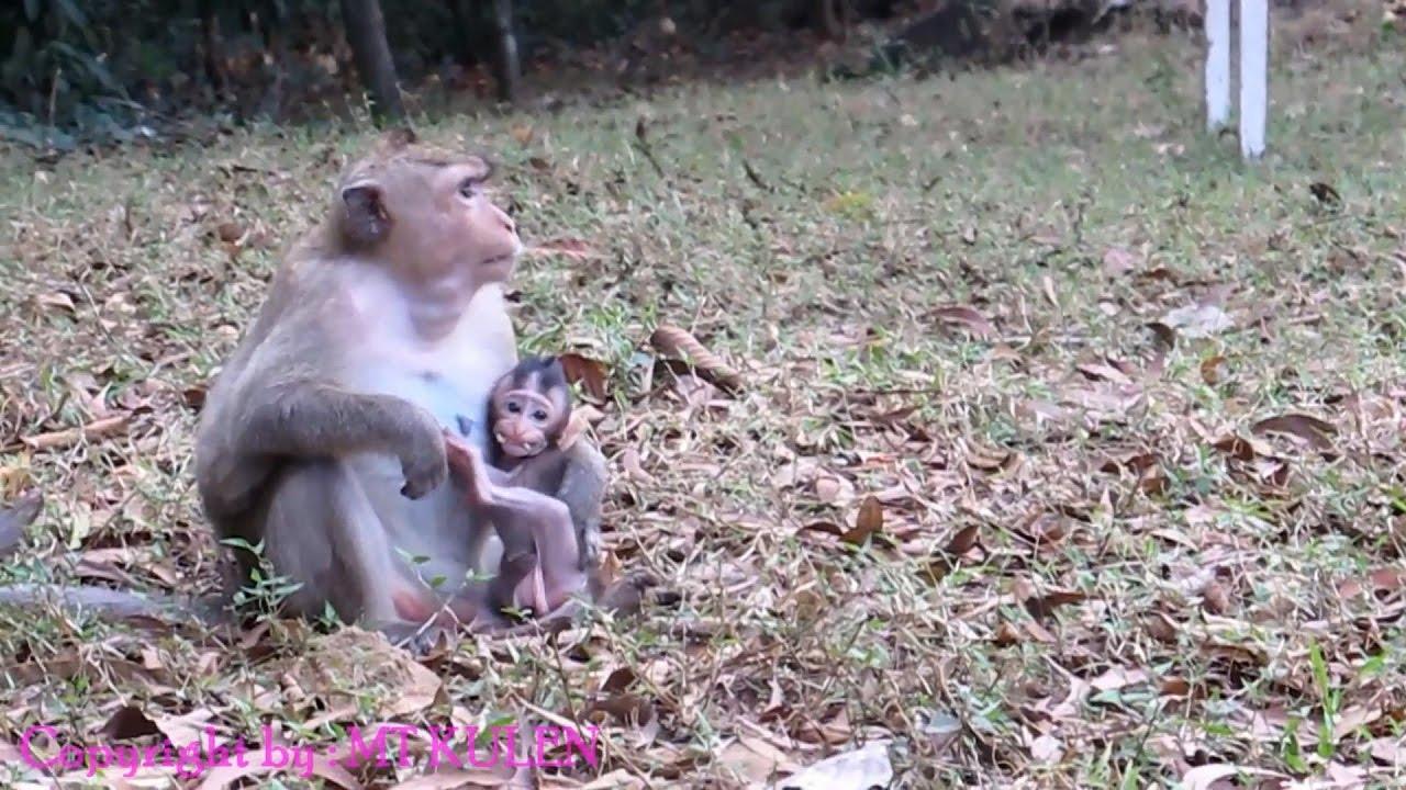 Nice mom's monkey with...