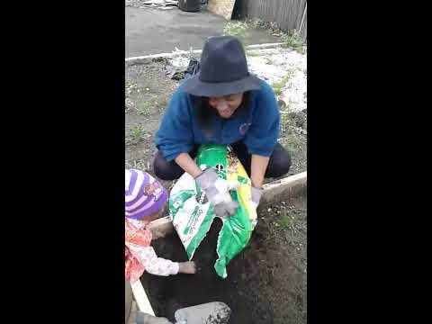 myx eating dirt turning the soil