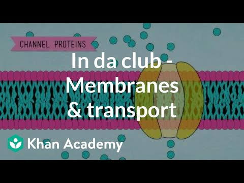 In Da Club - Membranes And Transport | Crash Course Biology | Khan Academy