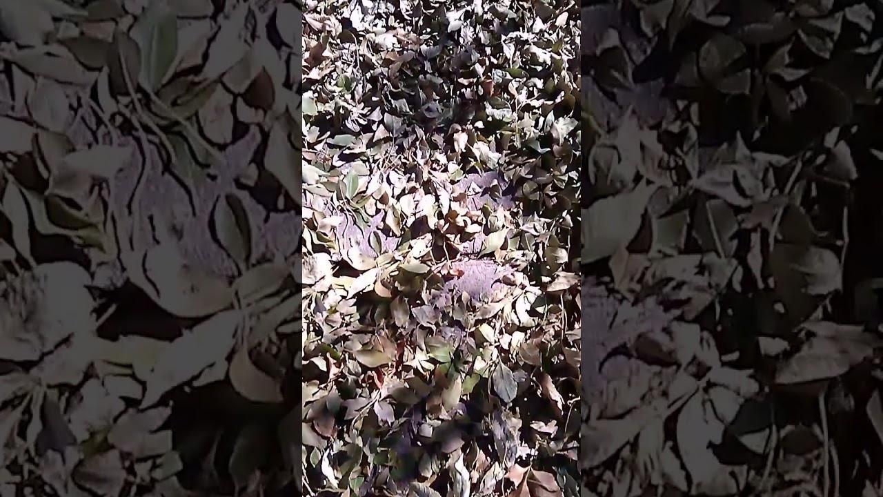 Autumn Leaves Sounds
