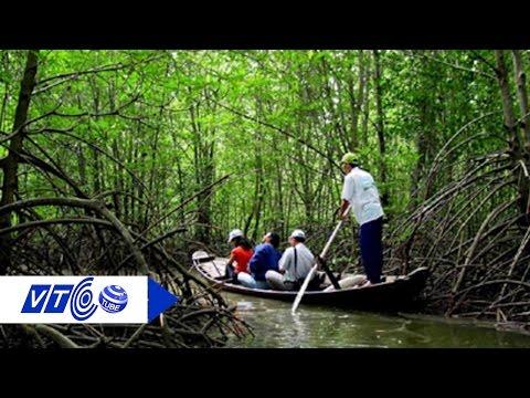 Bí quyết chống lâm tặc của người gác rừng Cần Giờ | VTC