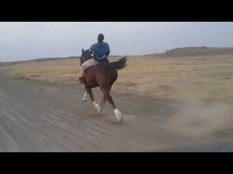fastest-horse-ever