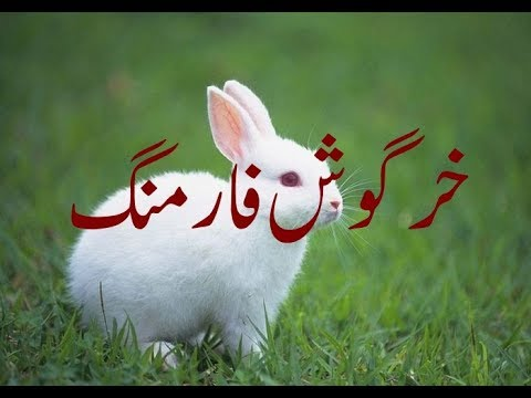 Rabbit Farming a profitable business (urdu/Hindi)