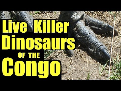 Living Dinosaurs of the Congo ♦️...