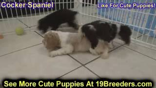 Cocker Spaniel, Puppies, For, Sale, In, Louisville,county, Kentucky, Ky,  Richmond, Florence, George