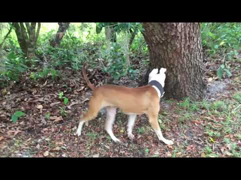 Rescue dog opens her first Christmas gift from YouTube · Duration:  1 minutes 12 seconds