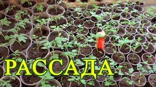 Чем подкармливать Рассаду томатов, перца, помидор. Органическое удобрение. Крапива. Вермисол.