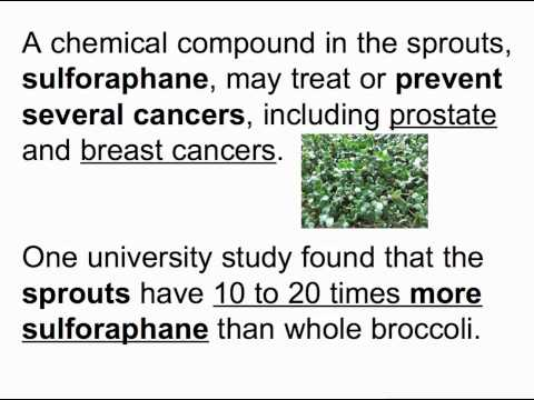 Chemical In Broccoli Sprouts May Treat >> Broccoli Sprouts Nutrition Youtube