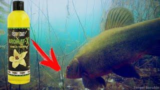 Линь на ВАНИЛИН Реакция рыбы Подводная съемка