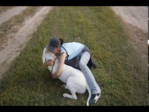 Terrifying video about a very dangerous breed DOGO ARGENTINO