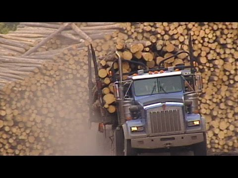 U.S. imposes softwood lumber duties up to 24%