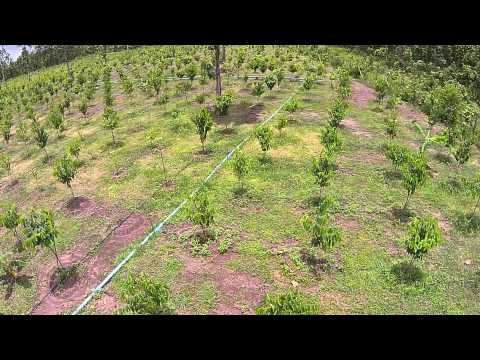 Drone View of a Agarwood Plantation in Thailand (Sakon Nakhon)