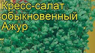 Кресс-салат обыкновенный Ажур. Краткий обзор, описание характеристик, где купить семена